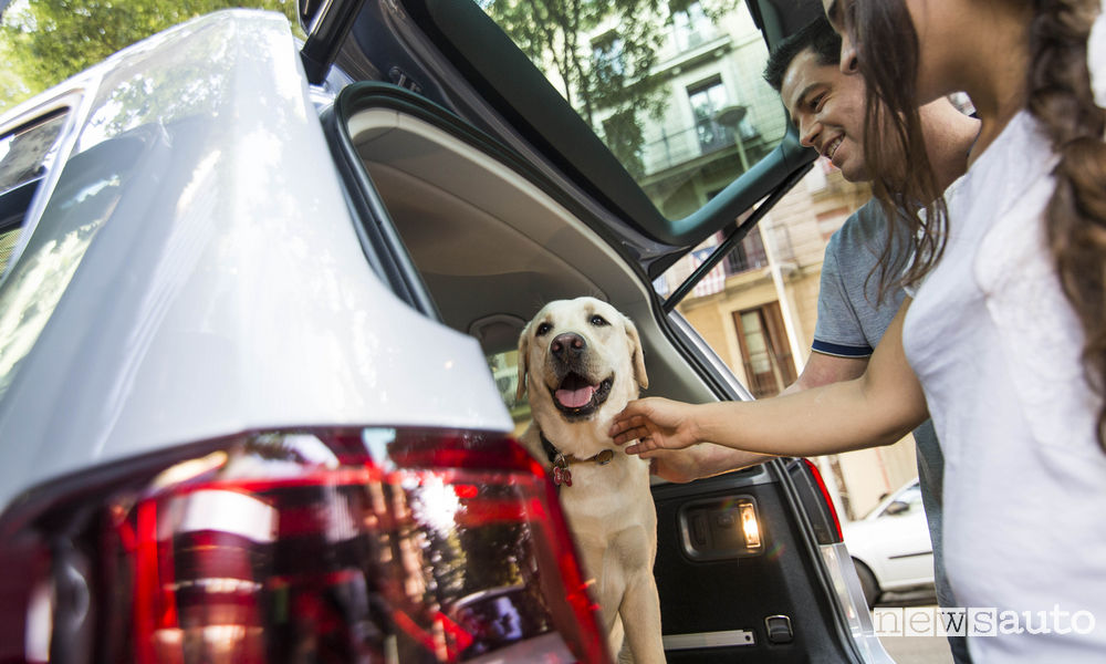Come trasportare il cane in auto, accorgimenti da adottare