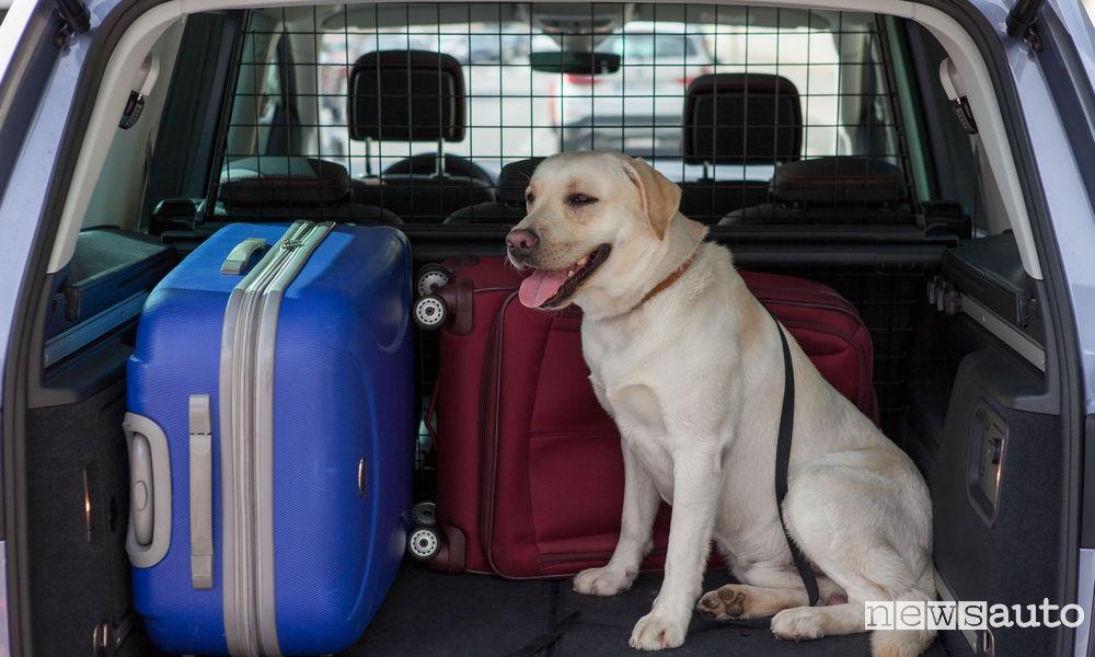 Come viaggiare in auto con il cane nel bagagliaio