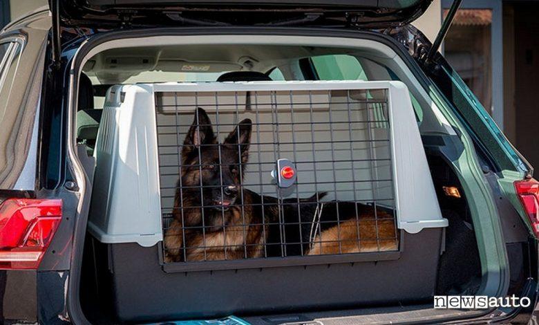 lasciare cane in auto pastore tedesco